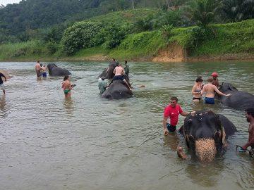 2 days 1 Night Khaosok Jungle Discovery