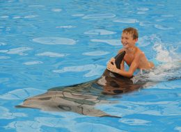 Dolphins Bay Phuket - Swimming with dolphins