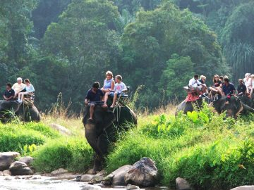 Full day Elephant Retreat/Join tours and escorted by English speaking