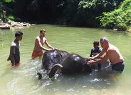 Full day elephant care with rafting