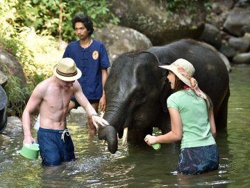 Elephant care, Phang Nga, Thailand