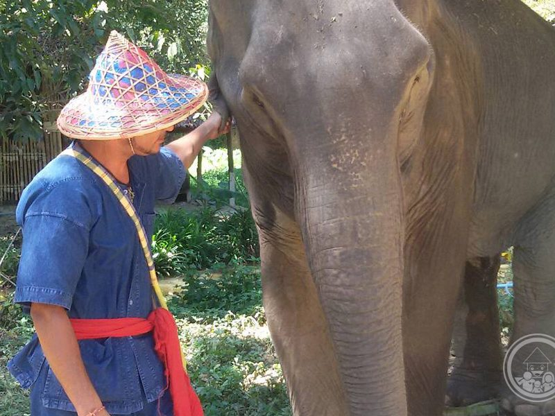 Full Day Elephant Care Phang Nga Phuket Goodwill Tours
